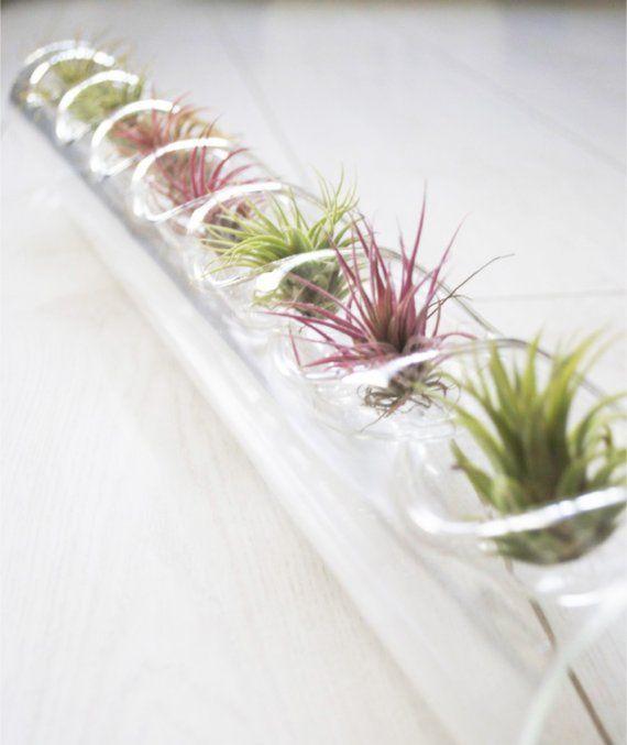 不思議な観葉植物