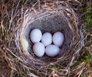 鳥が巣を作ったときの対処法