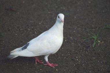 鳩を撃退する方法は⁉マンションにありがちなハトの被害!