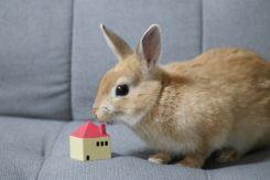 集合住宅で飼いやすいペット!ウサギの飼育方法を紹介!