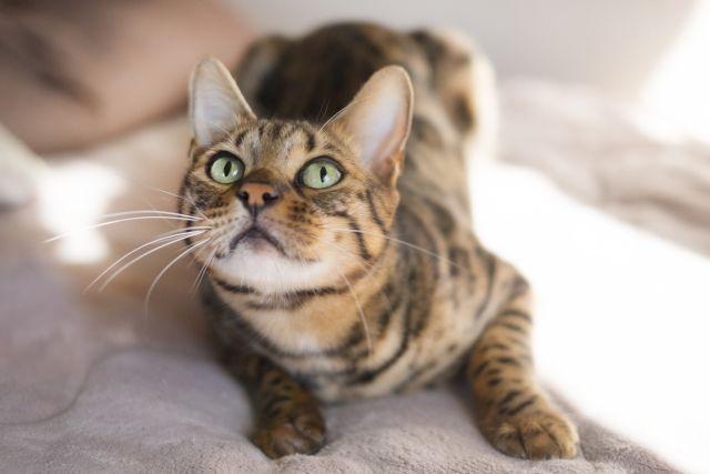 人気の猫の品種は?