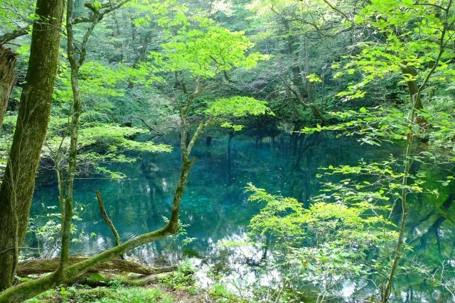青森県の白神山地と十二湖
