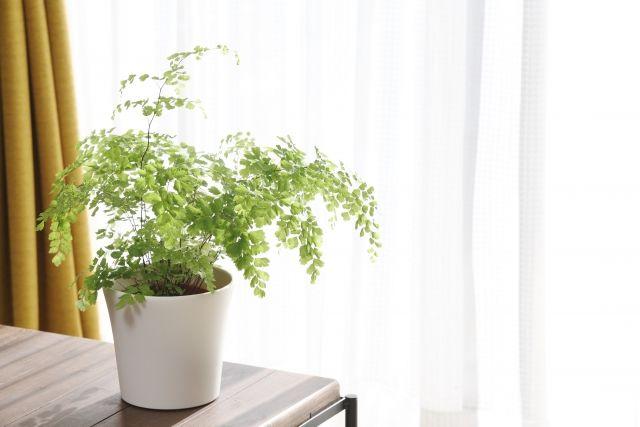 光合成中の観葉植物
