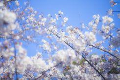 一人暮らしが始まる4月の風景