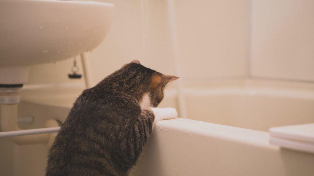 浸け置き中のシャワーカーテンを覗く猫