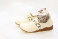 靴箱に収納し忘れた靴