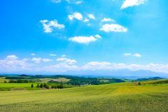 北海道 夏 ひまわりの里