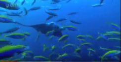 癒される海中の映像