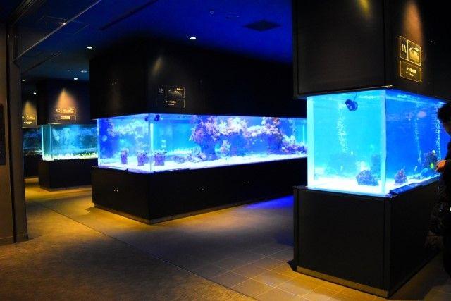 大型魚の水槽