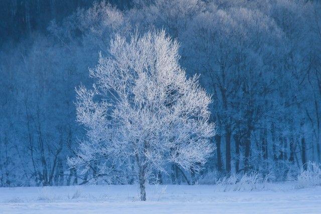冬の景色①