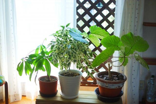 春らしく模様替えした部屋に置かれた観葉植物