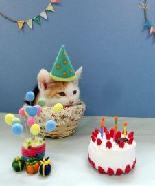 猫の記念日の子ネコちゃん