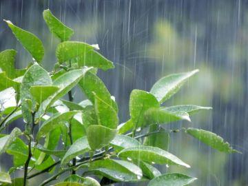 梅雨の仕組み 雨