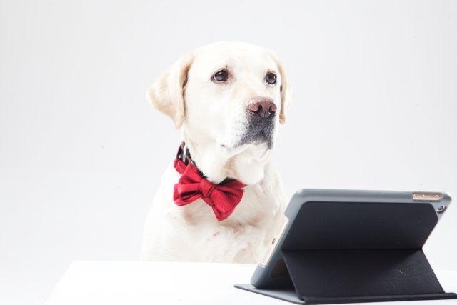 犬とタブレット