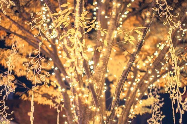 もうすぐクリスマス!これまでのクリスマスコラムまとめ